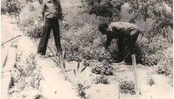 Основание виноградников Ерасхского винзавода